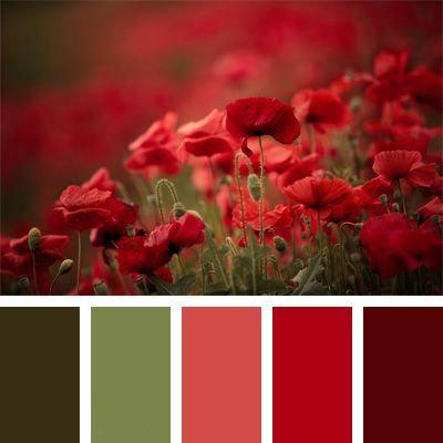 Kytice v červených odstínech