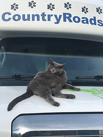 country roads kitty.jpg