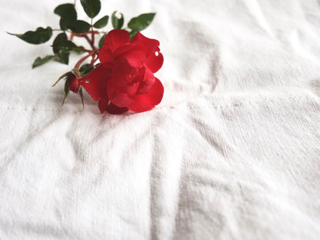 #rosesrevolutionday / für eine gewaltfreie geburtskultur