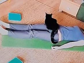 FREE AUDIO CLASS: Regain health, energy & equilibrium with Yin & Restorative Yoga