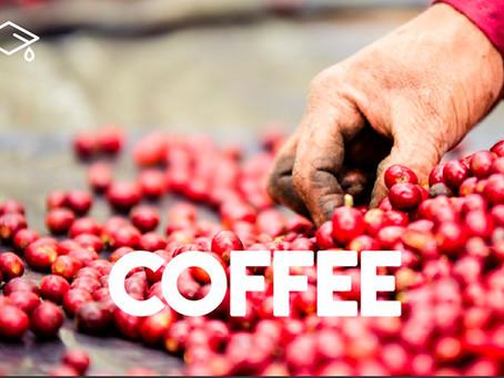 Um Coffee Co lança nanolotes de cafés especiais