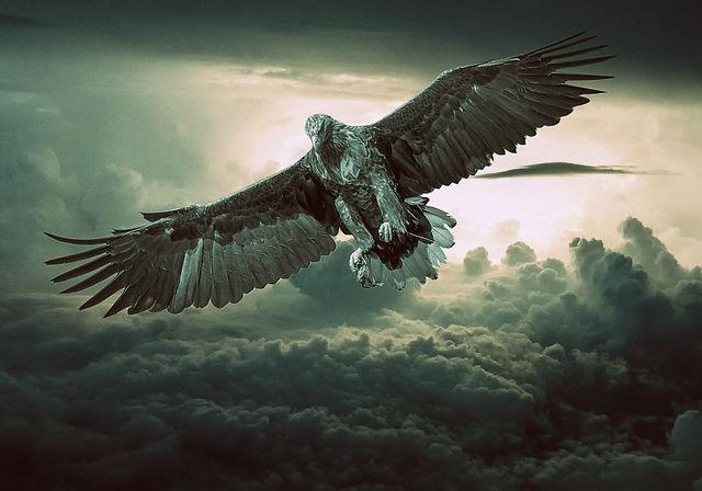 eagle-2044134.jpg