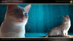 Snow Bengal Cat Katze - Horst & Ursula von Dimi Power by Falkenstein DE BY - 1080p