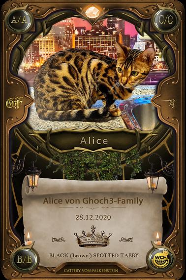 Alice von Ghoch3-Family - falkensteinbengal