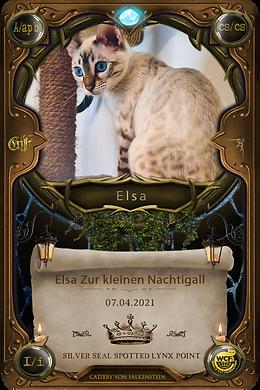 Little Elsa Zur kleinen Nachtigall - Falkensteinbengal