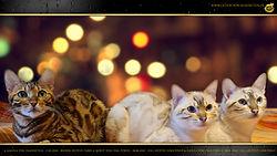 Bengal Cat Katze Trio - Angela von Falkenstein & Horst & Ursula von Dimi Power DE BY - 1080p