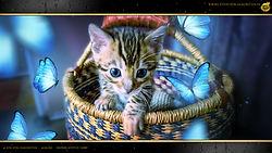 Bengal Kitten - Sissi von Falkenstein