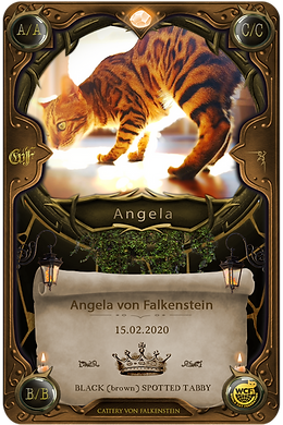 Angela von Falkenstein - Falkensteinbengal