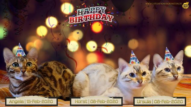 Happy Birthday an das Cattery von Falkenstein Trio ;-)