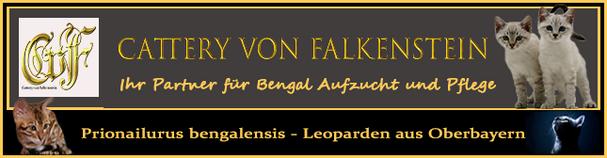 Bengal Katzenzucht aus Bayern