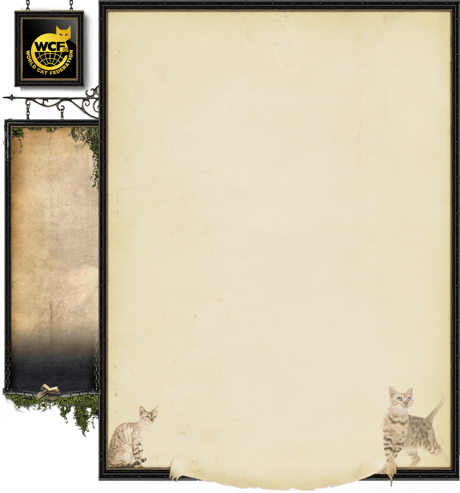 Start_Page_Background3.png