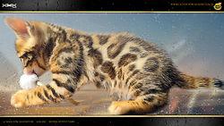 Bengal Kitten - Emma von Falkenstein