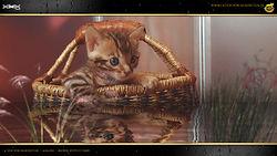 Bengal Kitten Cat Katze - Sissi von Falkenstein DE BY - 1080p - A Litter