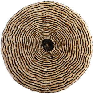 GROWTH RINGS I