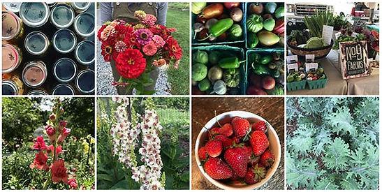 PYO organicfarm close to Nashville