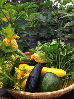 みずみずしい自家菜園の野菜