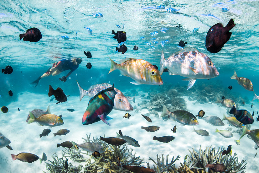 Snorkelling In A Fishbowl