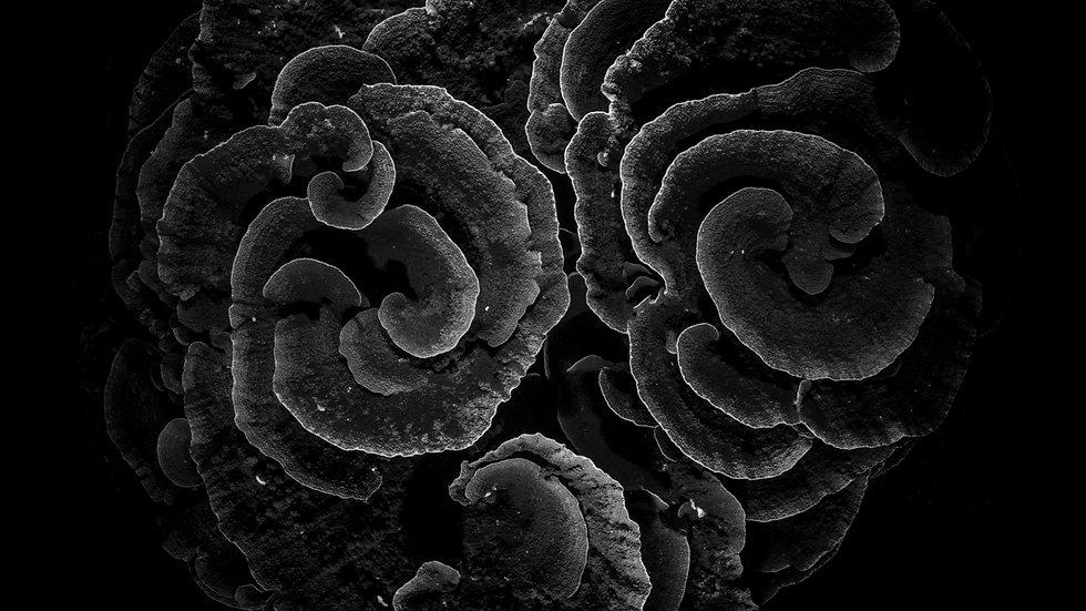 Coral at Night