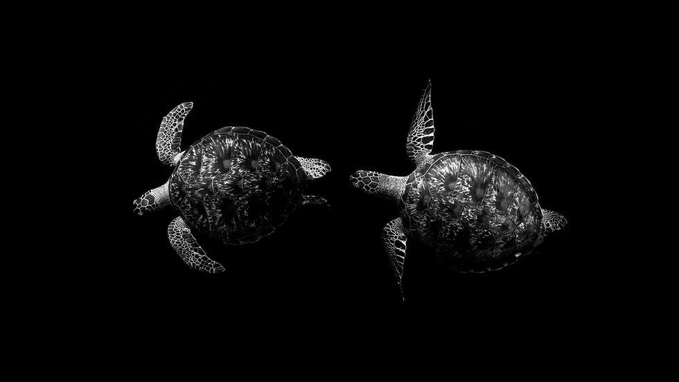 Turtle Dance