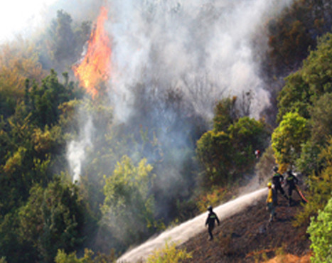Technical and administrative assistance for forest fires prevention plans