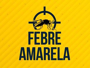Febre amarela: entenda mais sobre a transmissão da doença no Brasil