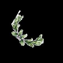 logo1.ai.png