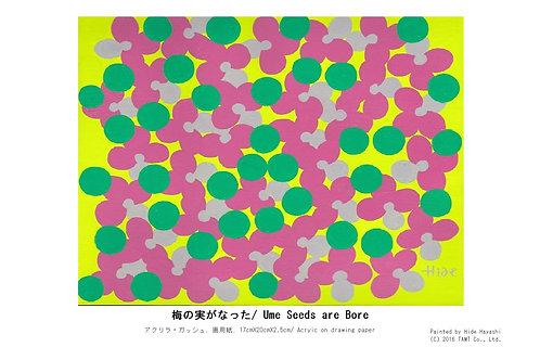 梅の実がなった/ Ume Seeds are Bore