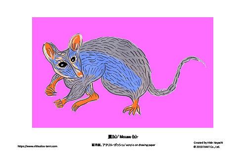 鼠(b)/ Mouse (b)