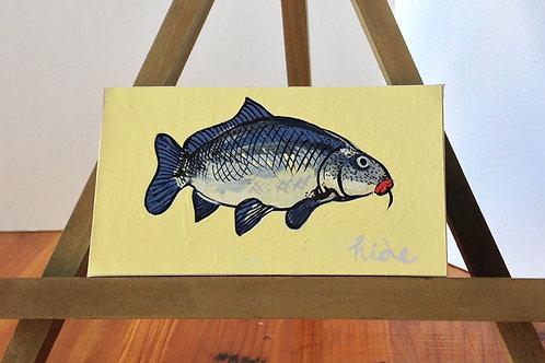 鯉/ Carpe