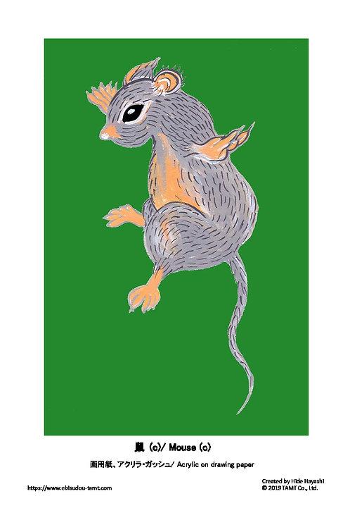 鼠 (c)/ Mouse (c)