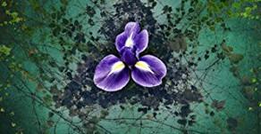 Book Review: Aletheia by Megan Tennant