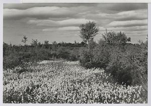 24.07 Blühendes Moor bei Garbsen