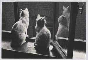 01.43 Mitbewohner gegen Ratten und Mäuse