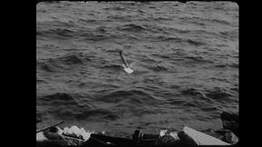 01_Gulls at gibraltar.png