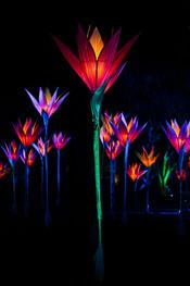 Flowers by Jigantics, Lightscape 2019.