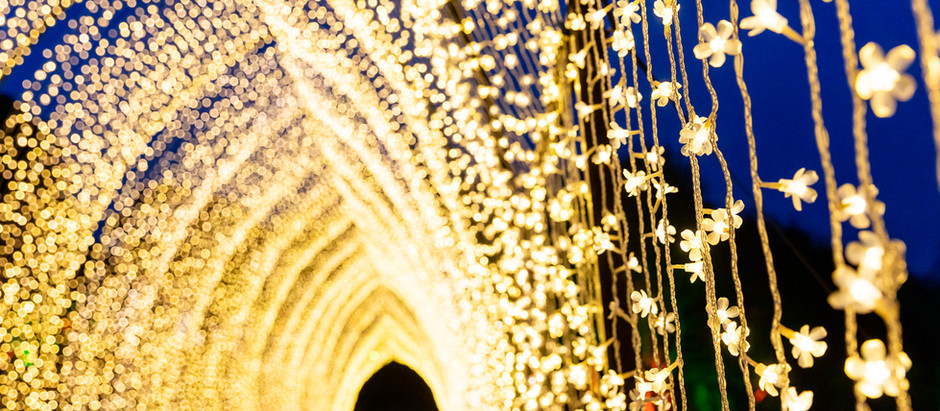Kew, Bedgebury and Blenheim Palace trails go on sale