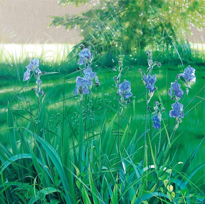 """""""Iris bleus"""" 1m x 1m"""