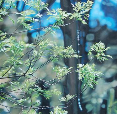 """""""Printemps sous les branches"""" 1m x 1m"""