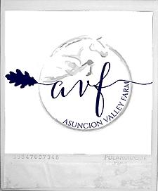 horse jumper logo