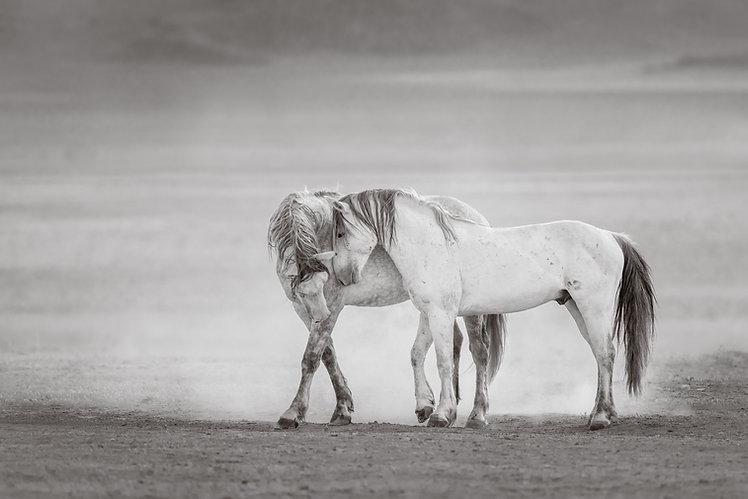 Desert Grays.jpg