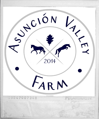 equestrian business logo