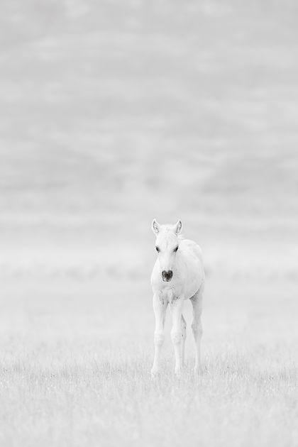 Wild Innocence.jpg