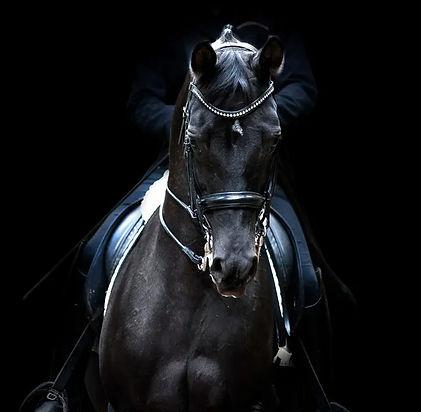 black dressage horse.jpg
