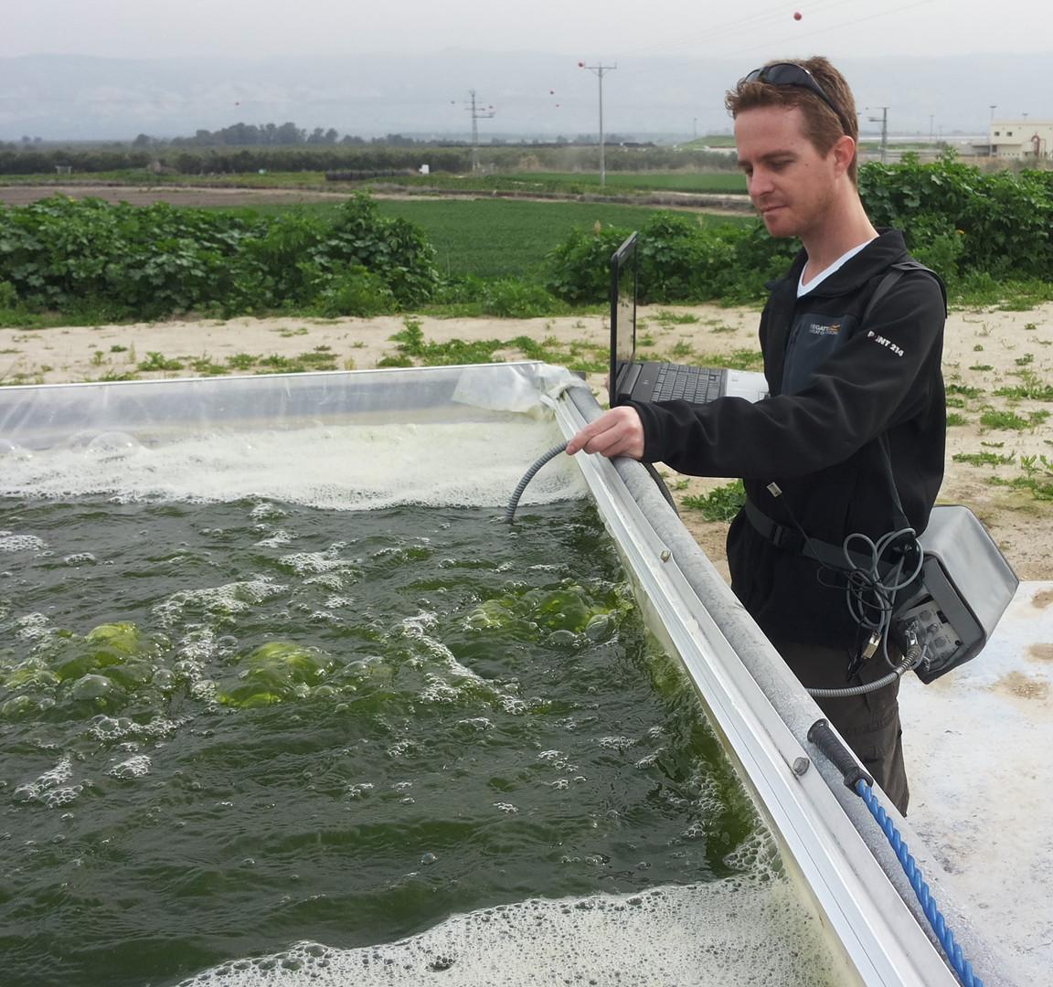 algae PAM.jpg