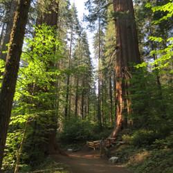 Merced Sequoia Grove