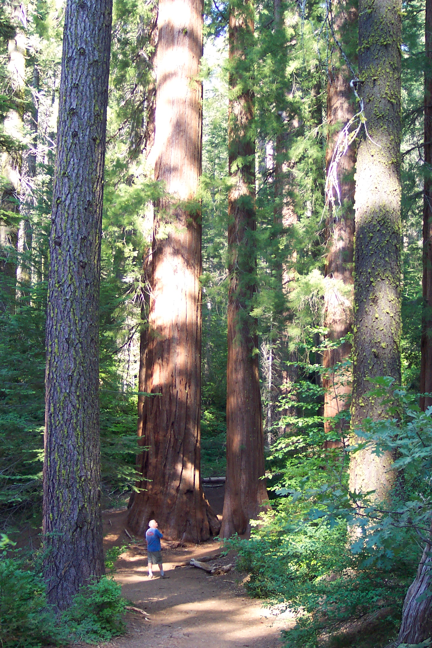 Merced Sequoia Grove
