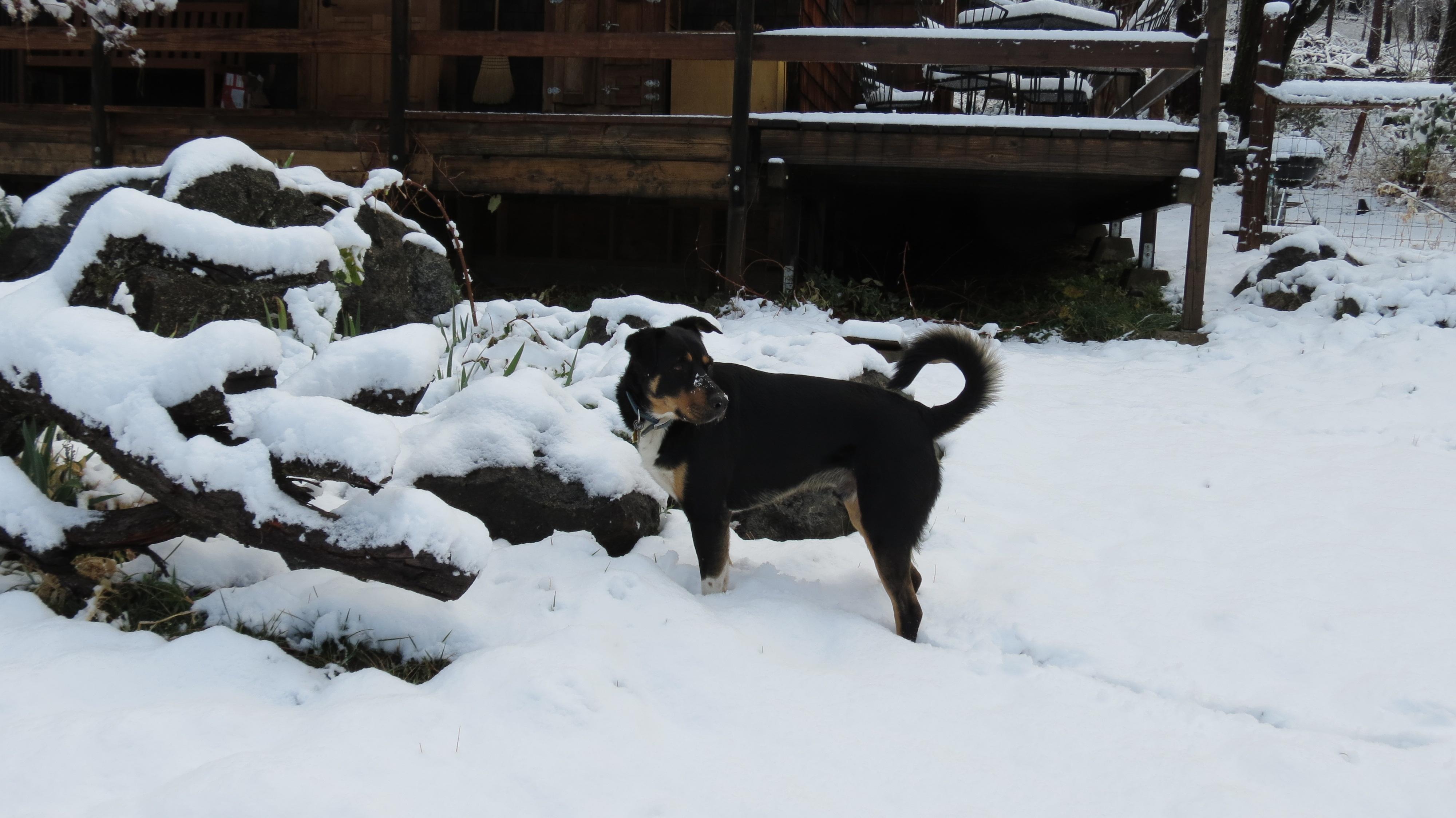 Resident Dog Clyde