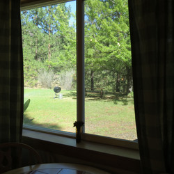 Looking out Window to Front Yard