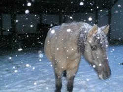 Der Winter kommt 1