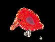 oiseau rouge.png